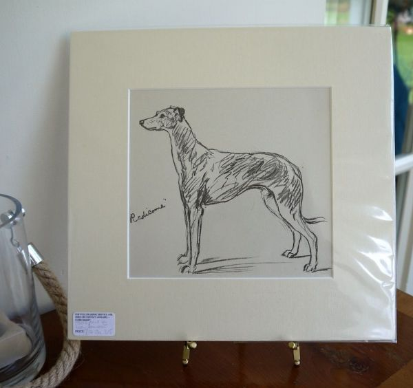 Greyhound  - Gre D5 -1930's print by Lucy Dawson